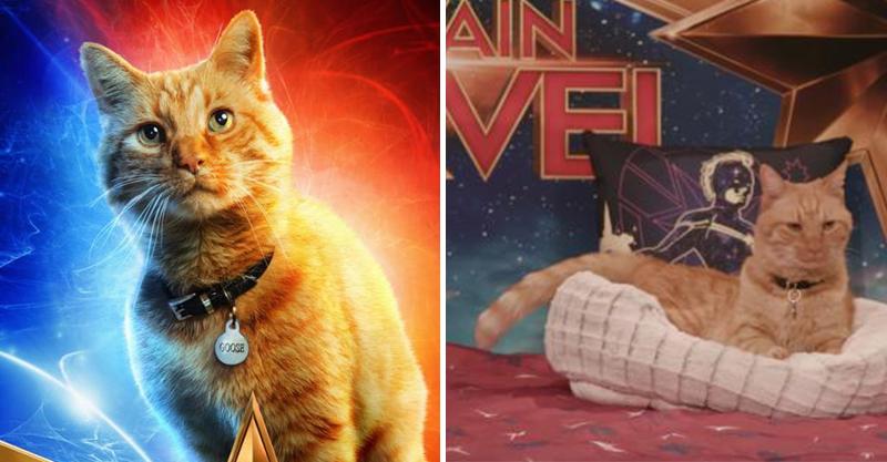 影/最萌宣傳!《驚奇隊長》派出「貓貓」開直播 50分鐘「只做2件事」貓奴全掏錢買票♥