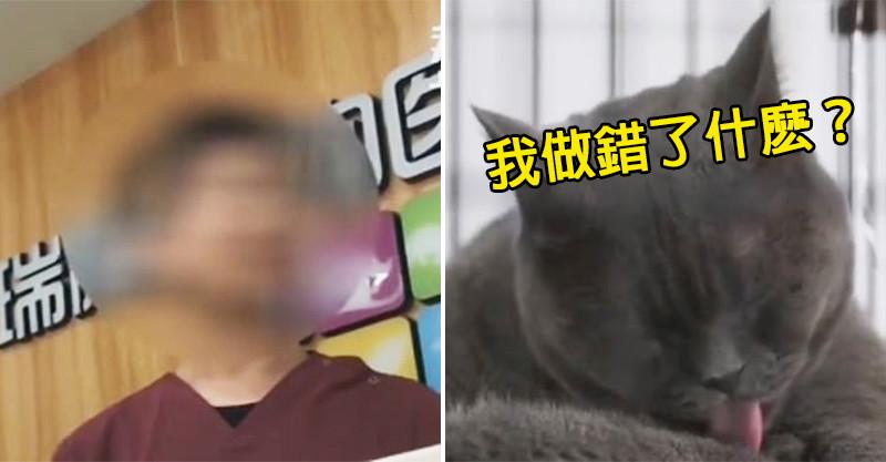 中國大媽嫌寵物貓長太醜...逼牠「進廠改造」還超得意:雙眼皮比較美!