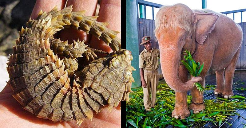 21個「當動物園VIP」也看不到的超稀有動物 龍真的存在!