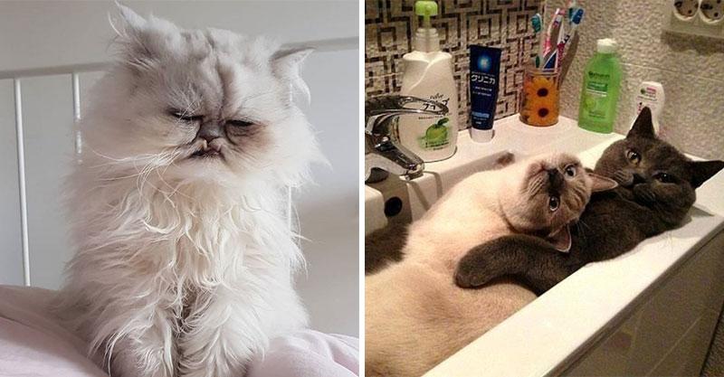 19張反應「比台灣八點檔還誇張」的爆笑貓咪 貓生眼神死的表情...20萬人超滿意!