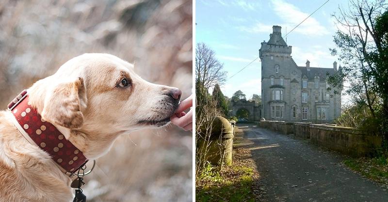 已經有600多隻狗狗「跳下這座橋」上天堂!牧師被請來調查詭異大橋...一到橋下秒懂原因