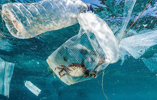 環保組織推出「海洋生物被塑膠袋困住照」超惹人憐 但卻被廣大網友罵翻
