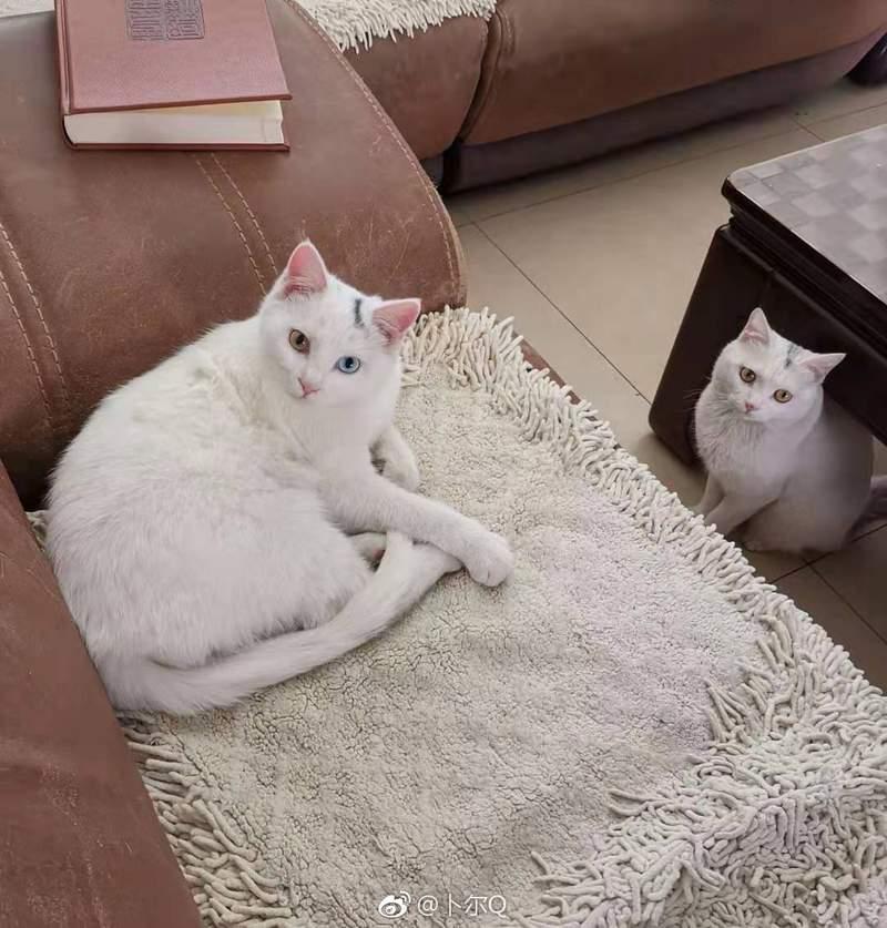 野貓跟著老媽回家...竟然「跟家裡的貓99%撞臉」她超無奈:分不出來了!