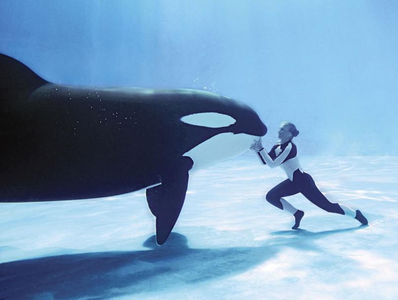 鯨媽隔著捕網看孩子被抓走!小虎鯨「過勞33年」嚴重憂鬱 捕鯨人看到「最後一刻」後悔了