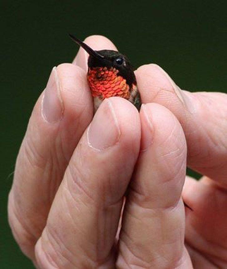 20隻親眼看過才知道「人類真的超渺小」的尺寸驚人動物