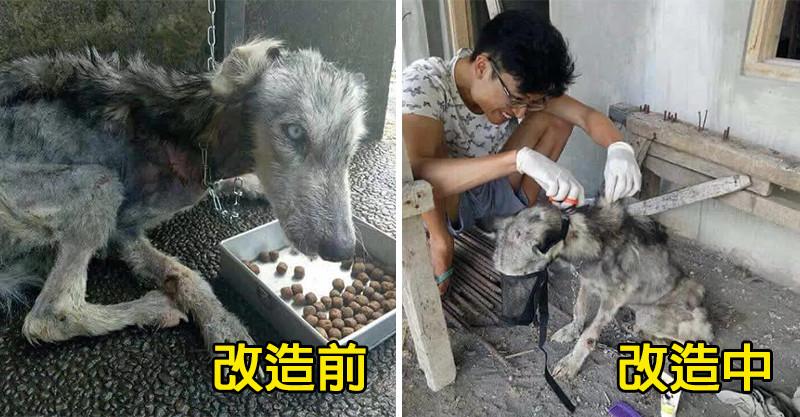 可憐狗狗瘦到皮包骨...暖男秒帶回家!10個月後牠「恢復真面目」網看到傻了:好驚豔