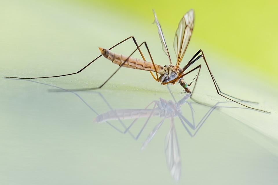 蚊子也會欺善怕惡!研究發現「越善良」越容易被蚊子叮 牠們光看「你的動作」就知道