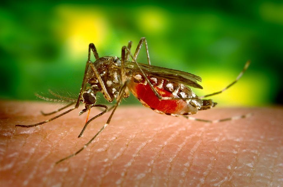 6個讓蚊子「寧願咬其他人也不咬你」的日常小技巧 你身上的「味道」正是關鍵!