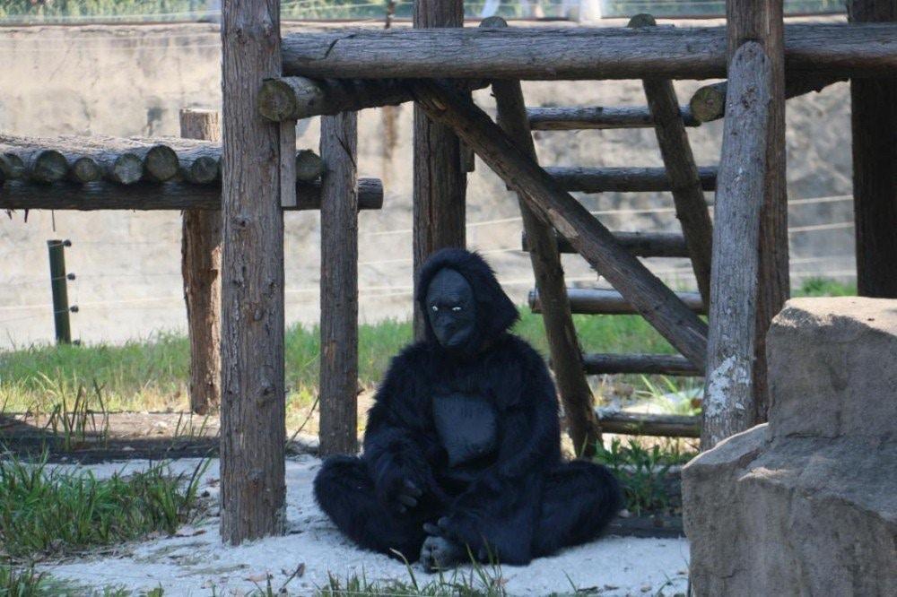 花200元去動物園「體驗非洲之美」 遊客看到「綁在樹上的2D動物」冷笑:賣創意?