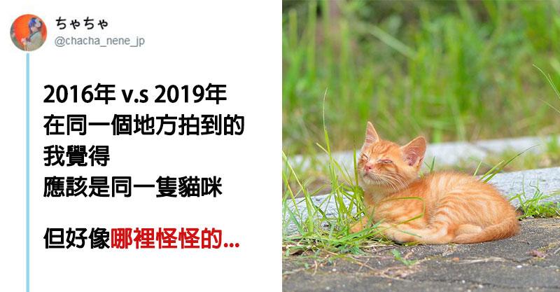 網友重遊舊地「意外巧遇」當年的小浪貓 中年發福「萌度走鐘3倍」網笑:橘貓正常發揮!