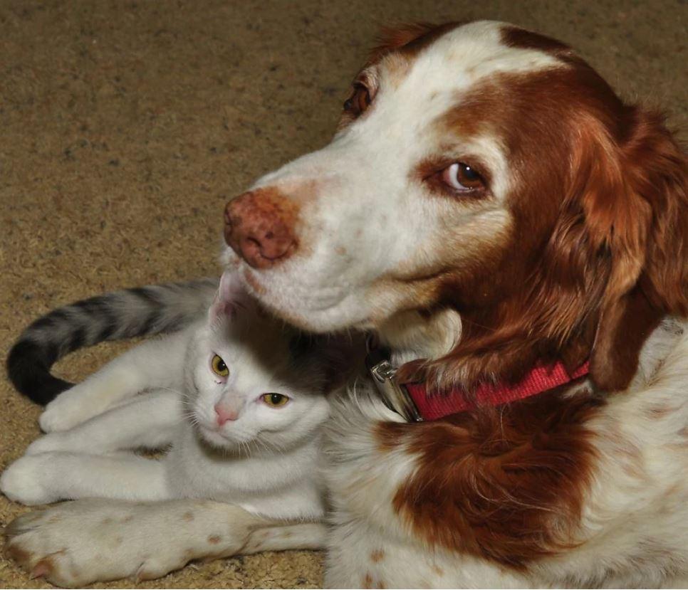 10個世界各地為動物制定的「超有愛法規」 義大利飼主「1天沒溜狗3次」就犯法