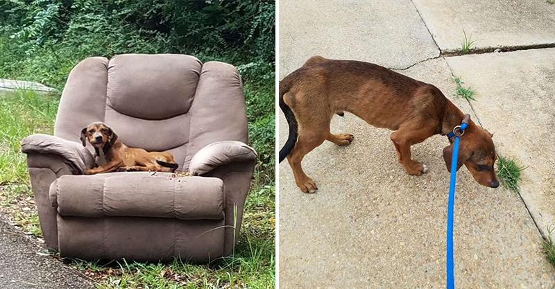 主人路邊丟沙發「附贈一隻狗」 牠呆坐7天「變皮包骨」網爆淚:竟然還在等…