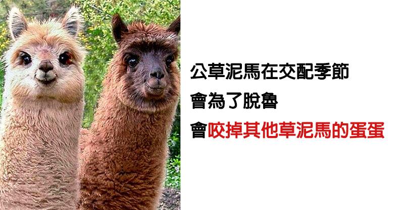 20個「生物老師也不知道」的動物驚奇小知識 小浣熊「洗棉花糖」的原因大公開!