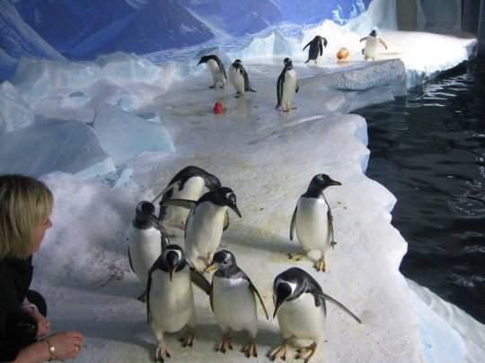 水族館養了14隻企鵝「有4對同志情侶」 想要小孩就去「做該做的」回頭找愛人一起養!