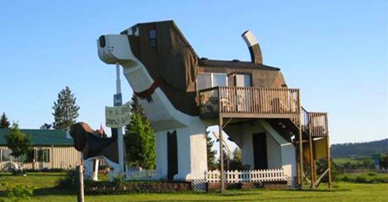 國外推「在肚子裡過夜」的巨型狗狗民宿 揭開「內部超澎湃設計」網驚喜:狗奴最愛!