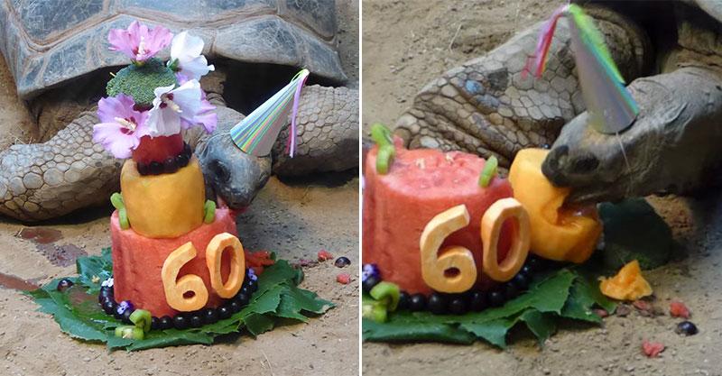 影/動物園慶祝「老龜60大壽」舉辦生日趴 「生日蛋糕」藏驚喜網推:太用心!