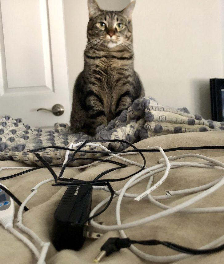 20隻無論在哪裡「牠就是老大」的霸道貓咪 喵星人「逼你減肥」的方式超爆笑!