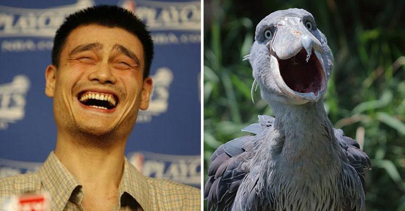 他捕捉到自然界「野生最靠北笑容」 網笑翻:最後那個笑太過分!