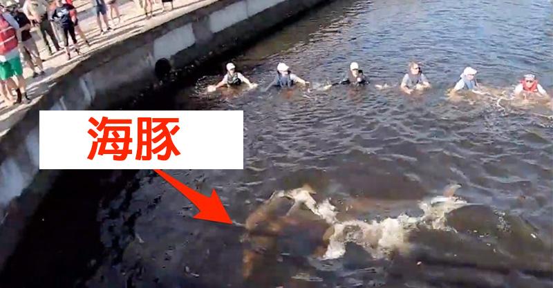 影/14人跳水「牽手築人龍」逼近海豚 結果只為了「帶牠們回家」民眾鼓掌叫好!