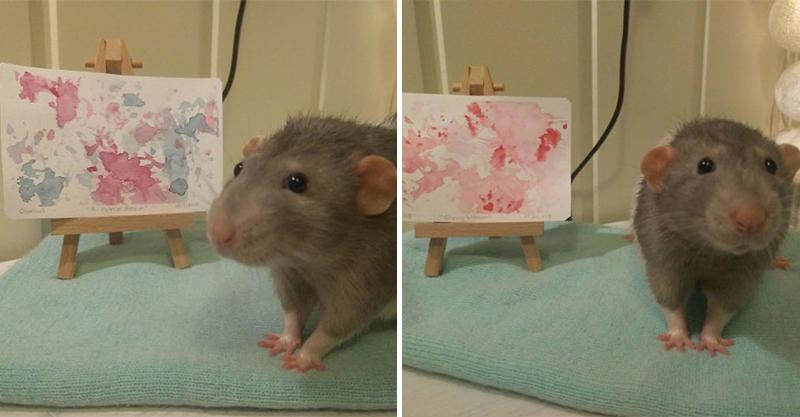 鼠界畢卡索!用超萌「小腳掌做畫」賺零食錢 主人:牠是我黑暗人生中的明燈