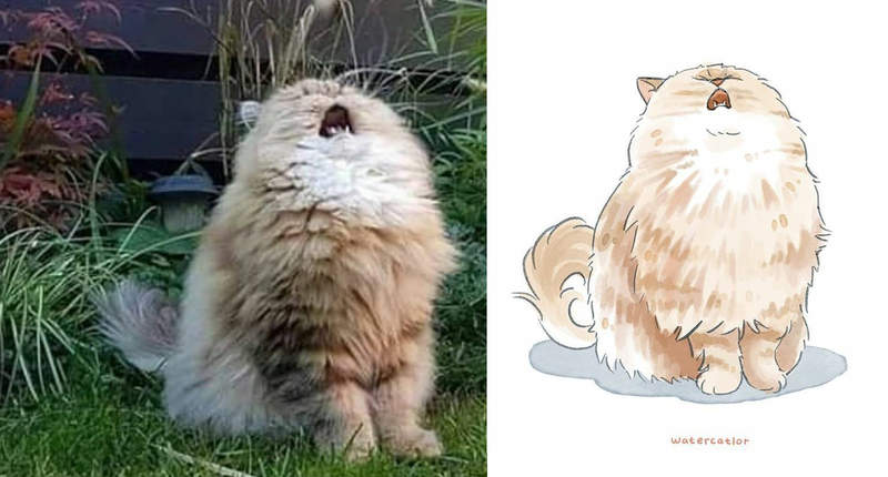 藝術家把「搞怪貓咪」打造成爆笑插畫 喵星人「用香蕉當圍巾」網笑翻:還原度100%