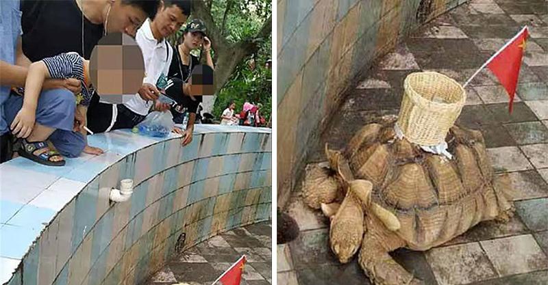中國動物園把「投錢籃」黏在烏龜上 超荒謬舉動引國際關注…官方:還在調查中