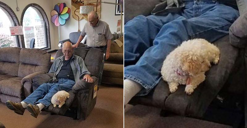 金孫無誤!爺爺堅持帶愛犬「選購沙發」引關注 看到「滿意表情」才肯下單