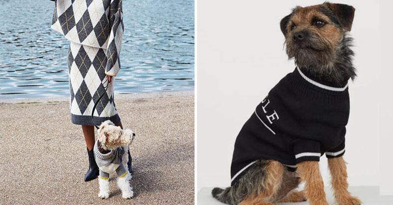 服裝品牌H&M推「狗狗主人情侶裝」奴才們超愛 貼心選用「回收材質」超環保!