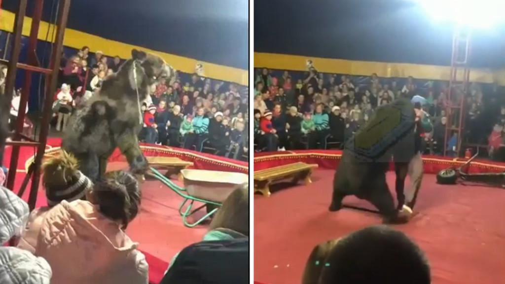 影/馬戲團黑熊被迫「推獨輪車」表演 舞台上「向訓練師暴衝」觀眾嚇壞尖叫!