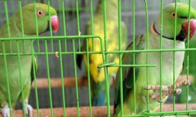 為了找到走私證據…法官要求「13隻鸚鵡」出庭作證 劈頭狂問:你們要被帶去哪?