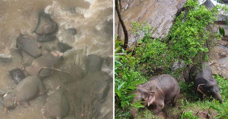 3歲小象寶寶「跌落瀑布」變天使 媽媽「為了救小孩」跟著摔下去…超悲傷畫面曝光!