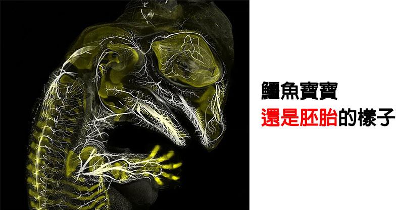 2019年「顯微放大照比賽」得獎照片出爐 網看到「懷孕的水蚤」細節超驚人:密集恐懼