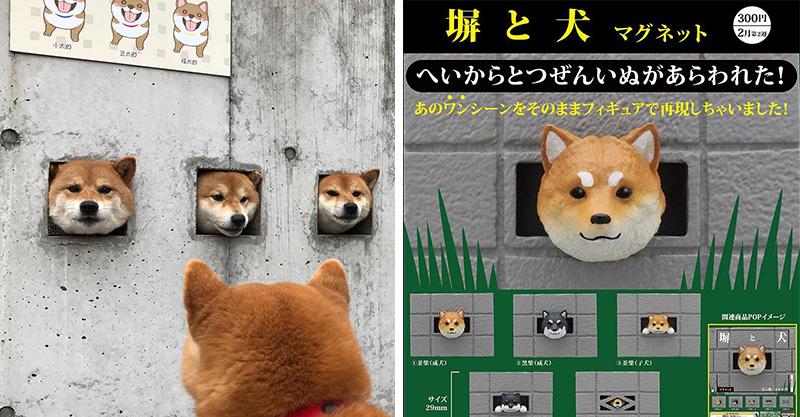 日推「探頭柴柴」扭蛋!從各種牆壁「長出柴犬」網友秒被生火:狗奴必收