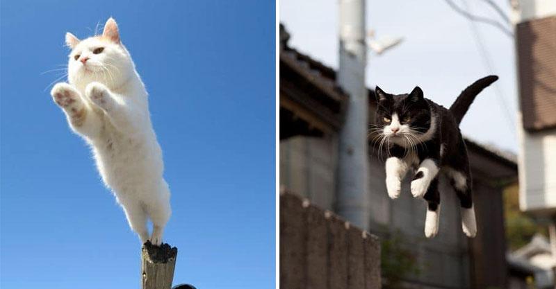 日本攝影師捕捉「貓咪特殊視角」爆紅 帥氣跳躍「表情太蠢萌」貓奴必儲存!