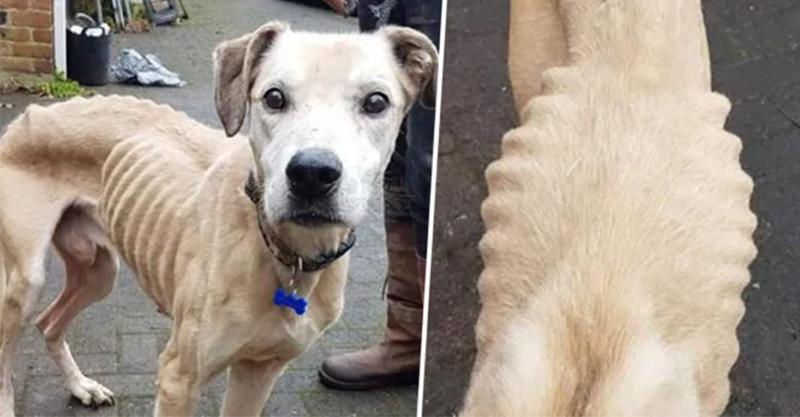 可憐狗瘦到「骨頭像在照X光」被送收容所 員工心疼「送上超滿飼料」發誓:絕對寵壞牠!