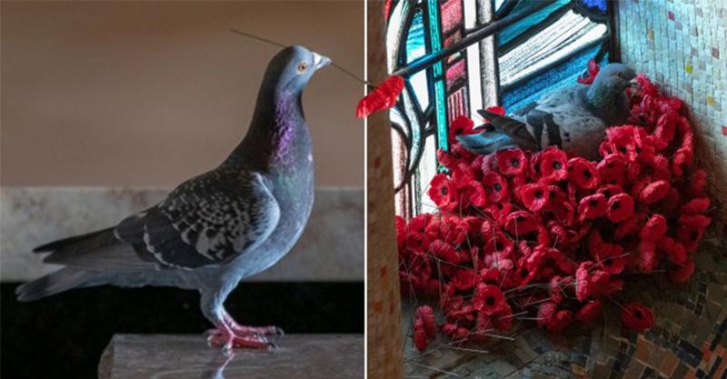 紀念館的「鮮花」每天被鴿子偷走 員工某天揭開「超可愛真相」震驚全網:很罕見