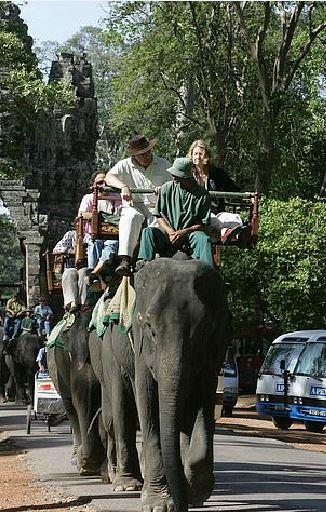 吳哥窟也宣布禁騎大象!「工作18年」病痛象終獲自由 退休享受叢林生活