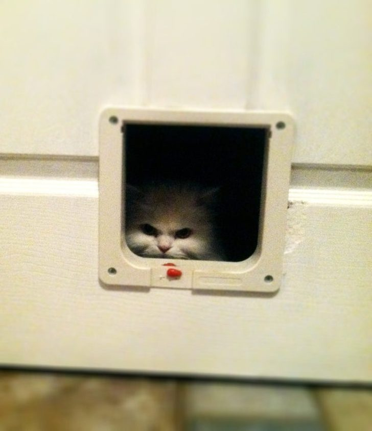 20個證明「貓咪是惡魔」的恐怖證據 牠「把身體對折」嚇壞貓奴!