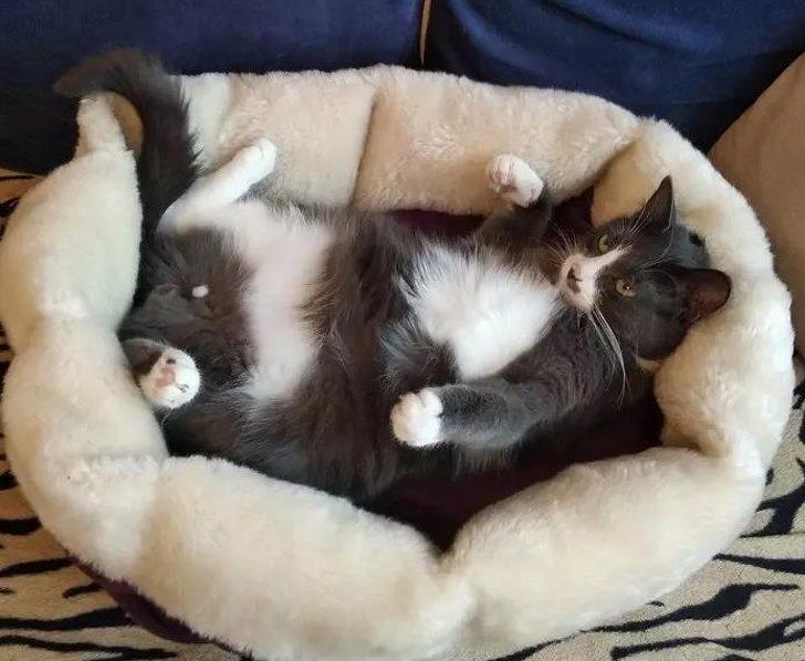 21張「貓咪絕對來自外星球」的驚奇照 牠們圍成一圈「敬拜太陽神」畫面超獵奇!