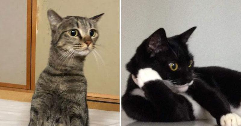 他發現貓皇「完美日式跪坐」姿勢超標準 往下看跪姿嚇壞:確定不是工讀生?