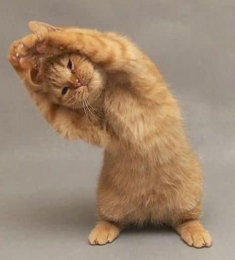 網瘋傳「貓咪雙手拜託照」讓網友忍不住亂配音:天公伯阿,給我肉泥吧!