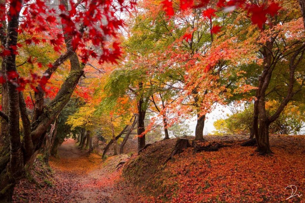 攝影師用鏡頭證明「京都美景是日本第一」 春櫻夏螢秋風冬雪...粉絲:美到像仙境❤