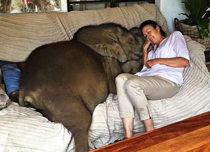 她把迷路小象帶回家…5年後跟「人類乾媽」每天膩在一起 討摸摸表情超萌!