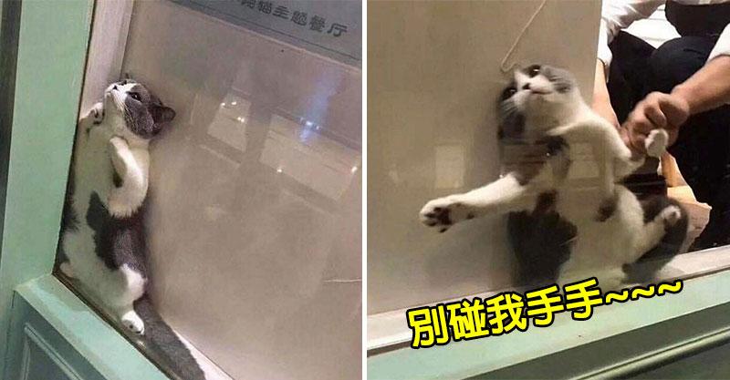 好心人救援受困貓 下秒牠「拖把式耍賴」表情逗樂全網:貓生毀滅!