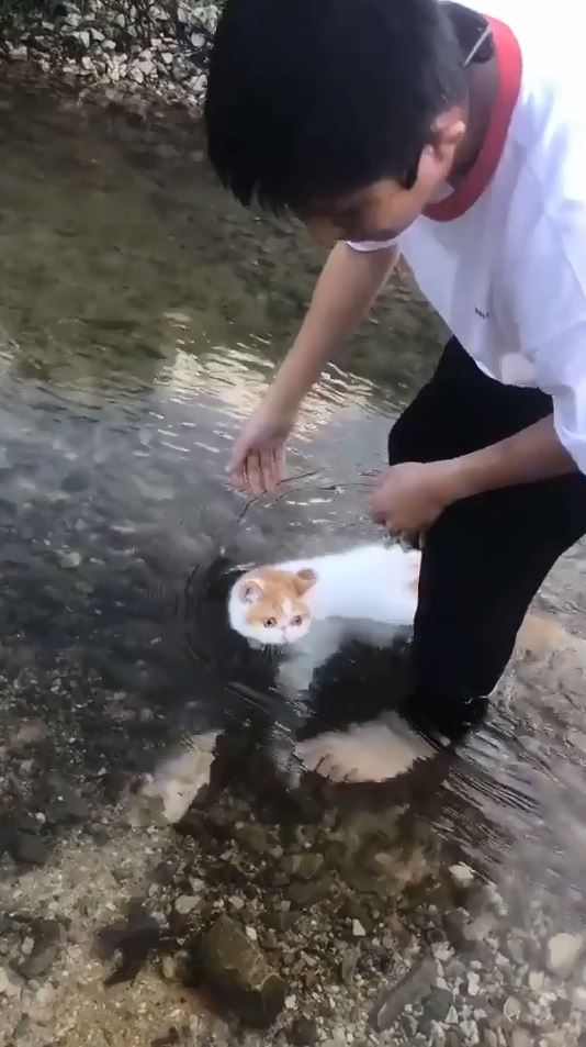 就跟你說我不會游!鏟屎官讓貓皇試水溫 下秒竟流走了:快點救駕QQ