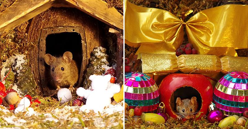他為老鼠打造「比迪士尼還狂」的夢幻家園 「每日菜單」媲美土豪級待遇!